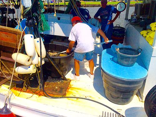 shrimp boating