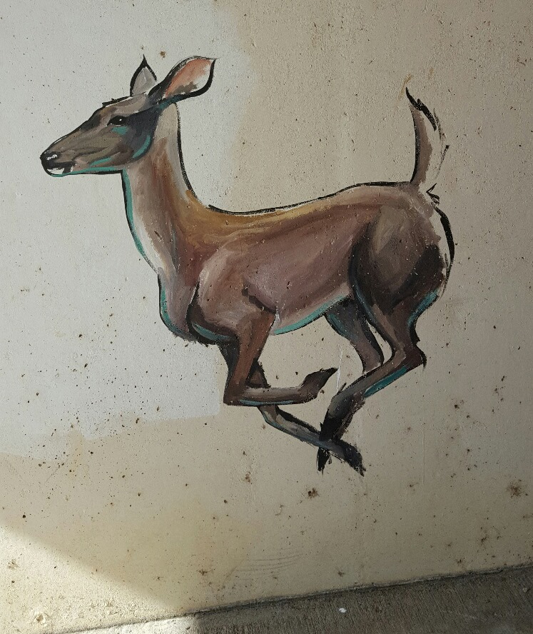 Graffiti art of doe in Texas